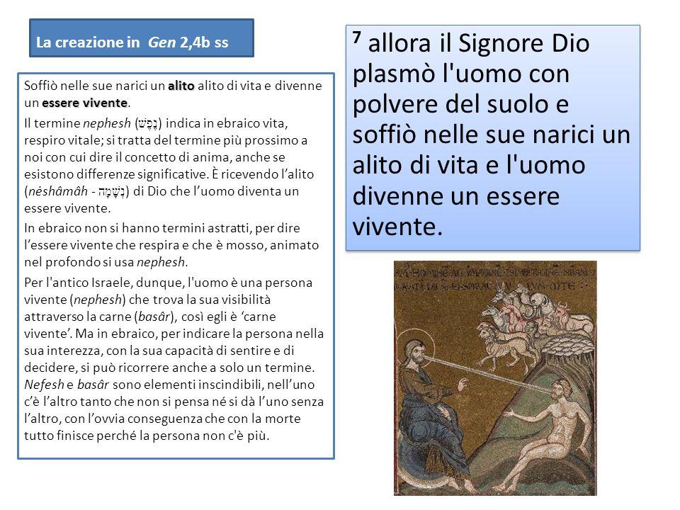 La creazione in Gen 2,4b ss 7 allora il Signore Dio plasmò l'uomo con polvere del suolo e soffiò nelle sue narici un alito di vita e l'uomo divenne un