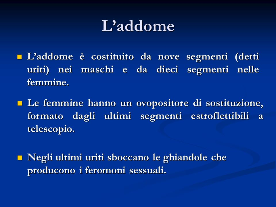 Laddome Laddome è costituito da nove segmenti (detti uriti) nei maschi e da dieci segmenti nelle femmine. Laddome è costituito da nove segmenti (detti