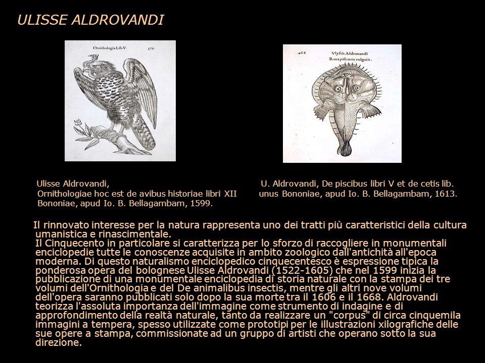 ULISSE ALDROVANDI Ulisse Aldrovandi, U. Aldrovandi, De piscibus libri V et de cetis lib. Ornithologiae hoc est de avibus historiae libri XII unus Bono