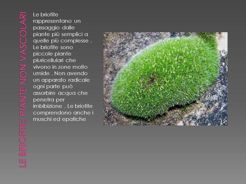 Le briofite rappresentano un passaggio dalle piante più semplici a quelle più complesse. Le briofite sono piccole piante pluricellulari che vivono in