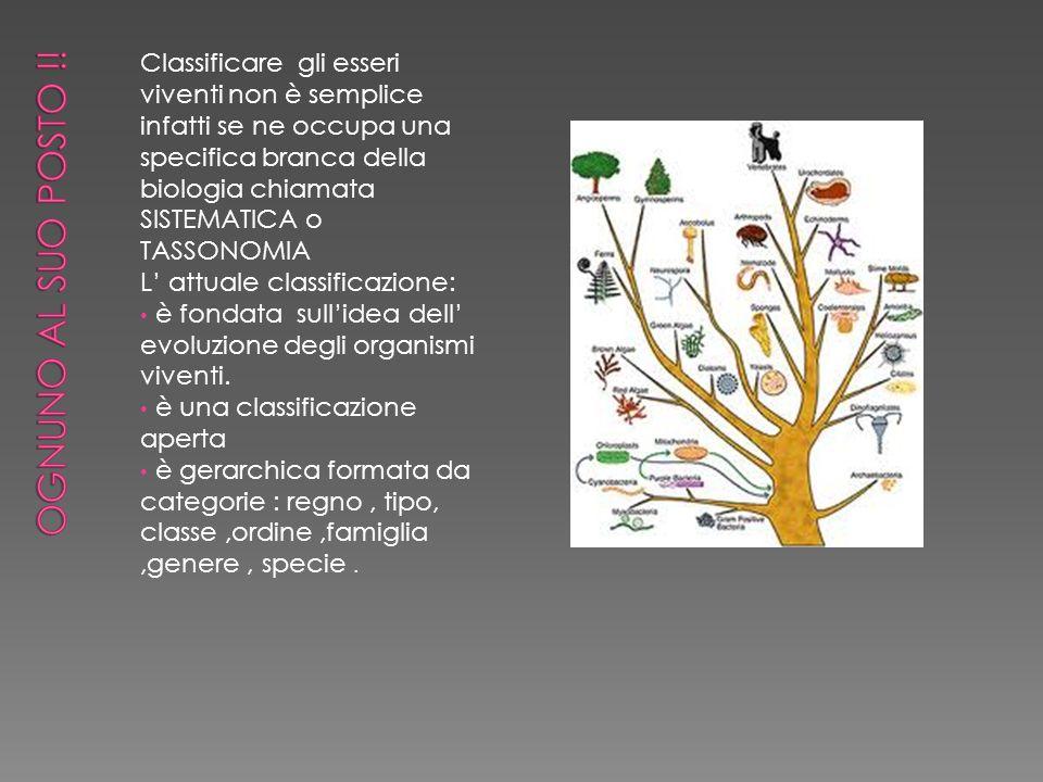 La specie e l insieme di tutti gli individui con caratteristiche molto simili in grado di riprodursi, generando figli simili.