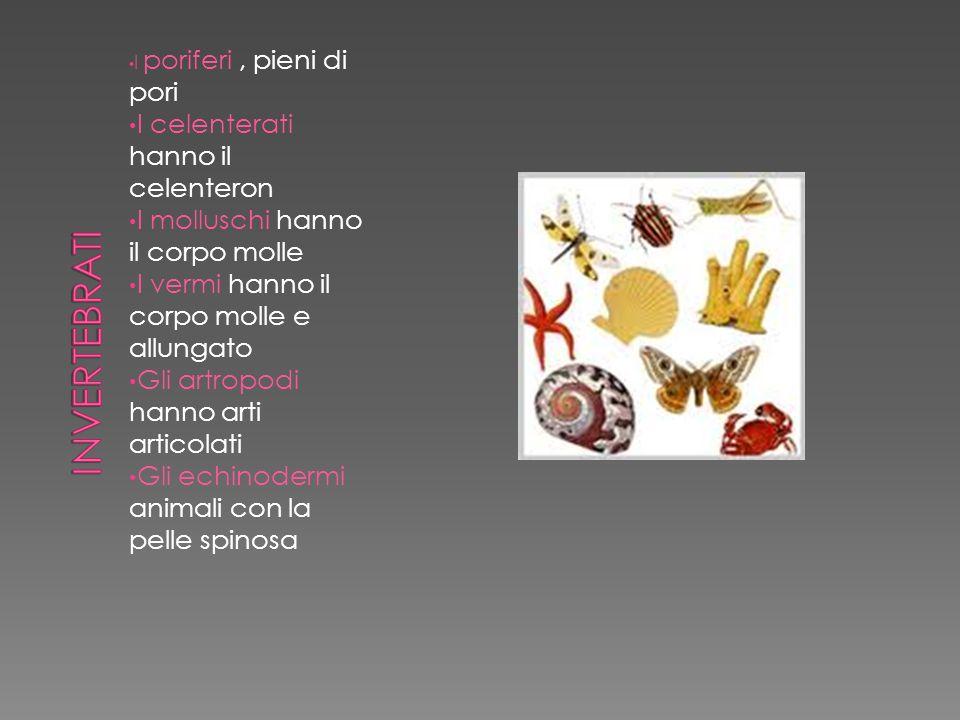 I poriferi, pieni di pori I celenterati hanno il celenteron I molluschi hanno il corpo molle I vermi hanno il corpo molle e allungato Gli artropodi ha
