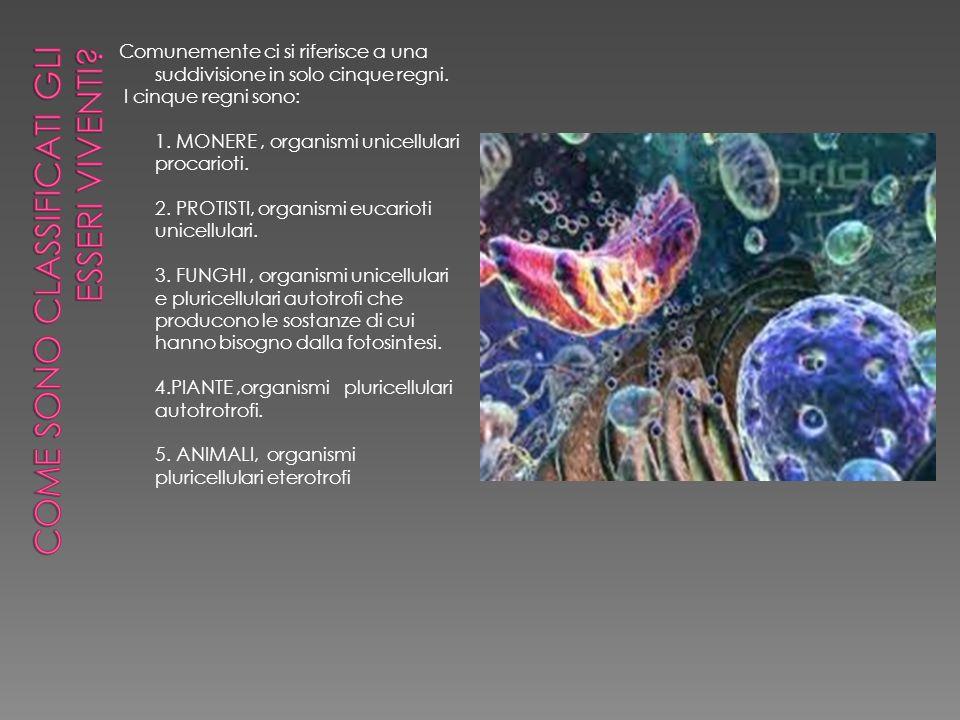 Quali sono le principali caratteristiche dei batteri .
