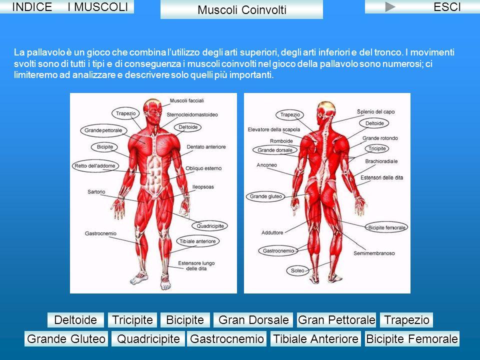 INDICEESCI La pallavolo è un gioco che combina lutilizzo degli arti superiori, degli arti inferiori e del tronco. I movimenti svolti sono di tutti i t