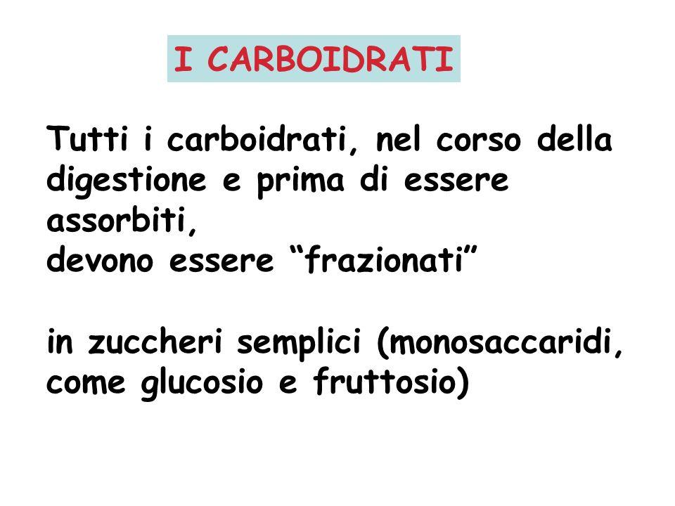Tutti i carboidrati, nel corso della digestione e prima di essere assorbiti, devono essere frazionati in zuccheri semplici (monosaccaridi, come glucos