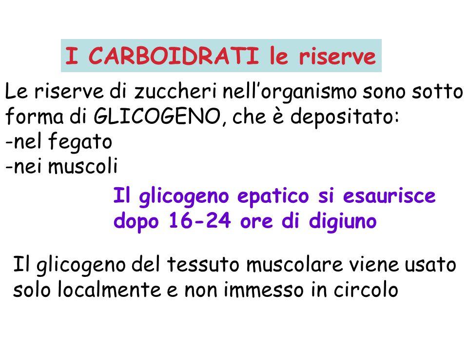 Le riserve di zuccheri nellorganismo sono sotto forma di GLICOGENO, che è depositato: -nel fegato -nei muscoli Il glicogeno epatico si esaurisce dopo