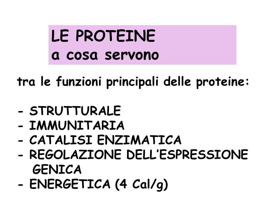 LE PROTEINE a cosa servono tra le funzioni principali delle proteine: - STRUTTURALE - IMMUNITARIA - CATALISI ENZIMATICA - REGOLAZIONE DELLESPRESSIONE