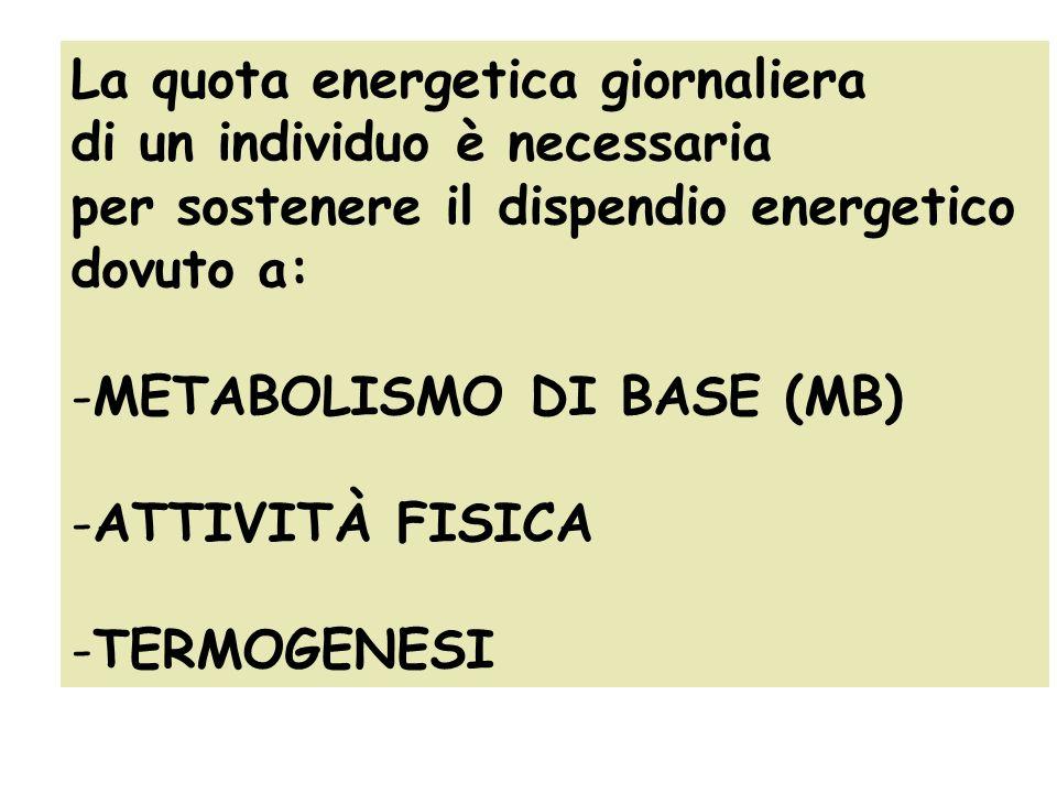 La quota energetica giornaliera di un individuo è necessaria per sostenere il dispendio energetico dovuto a: -METABOLISMO DI BASE (MB) -ATTIVITÀ FISIC