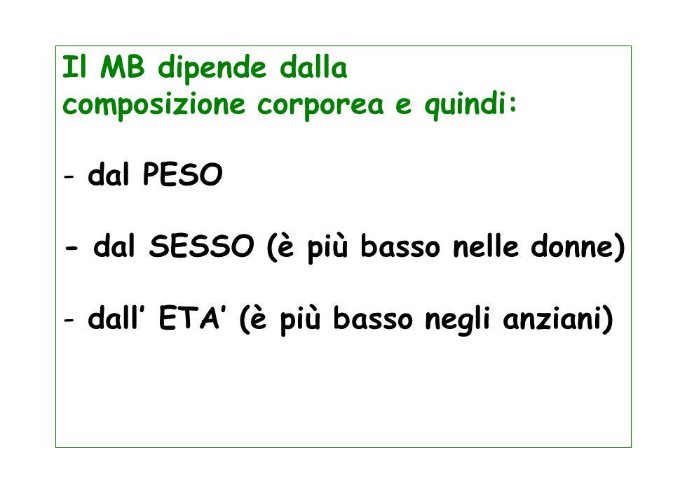 Il MB dipende dalla composizione corporea e quindi: - dal PESO - dal SESSO (è più basso nelle donne) - dall ETA (è più basso negli anziani)