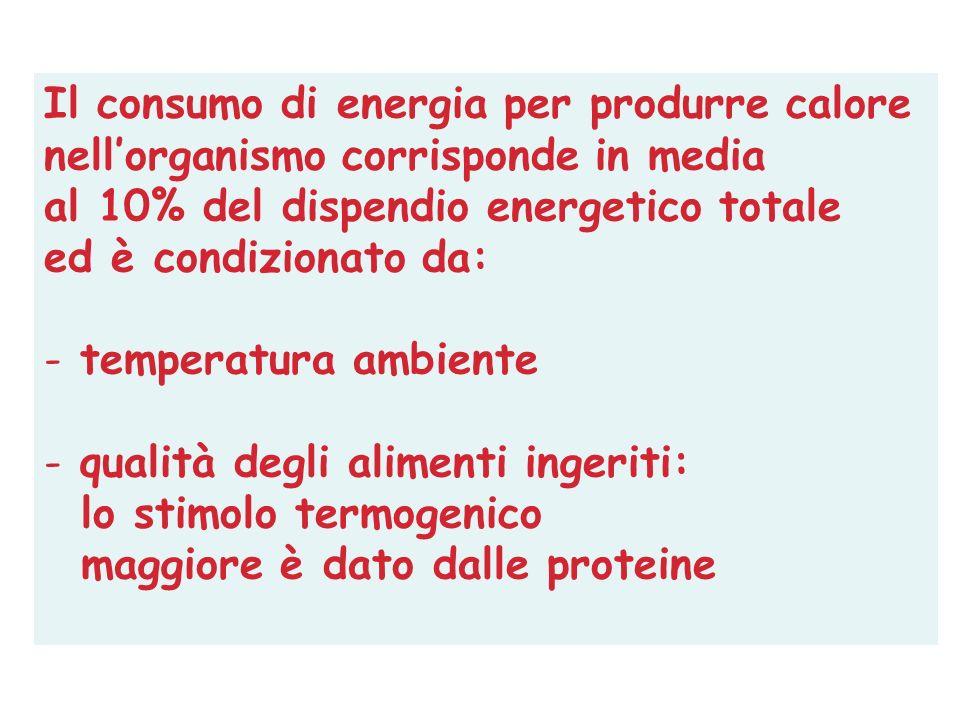 Il consumo di energia per produrre calore nellorganismo corrisponde in media al 10% del dispendio energetico totale ed è condizionato da: - temperatur