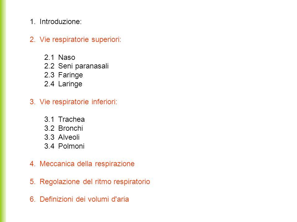 1. Introduzione: 2. Vie respiratorie superiori: 2.1 Naso 2.2 Seni paranasali 2.3 Faringe 2.4 Laringe 3. Vie respiratorie inferiori: 3.1 Trachea 3.2 Br