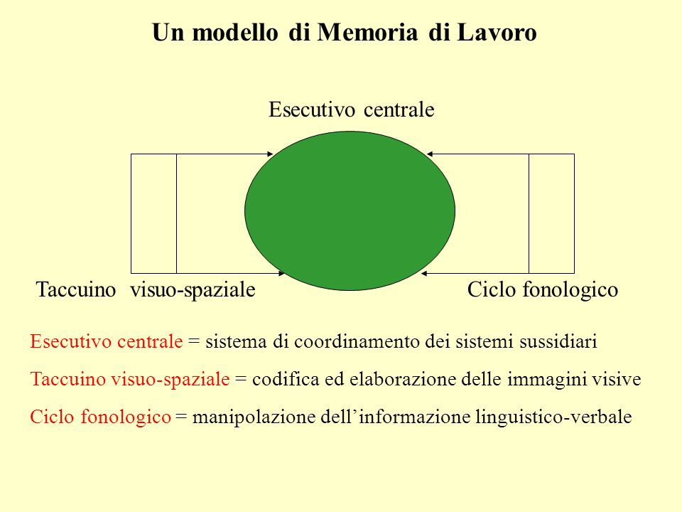 Un modello di Memoria di Lavoro Esecutivo centrale Taccuino visuo-spazialeCiclo fonologico Esecutivo centrale = sistema di coordinamento dei sistemi s