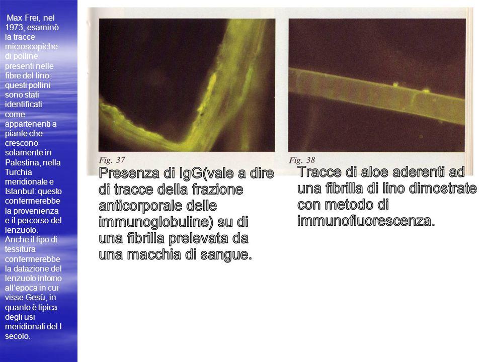 Max Frei, nel 1973, esaminò la tracce microscopiche di polline presenti nelle fibre del lino: questi pollini sono stati identificati come appartenenti