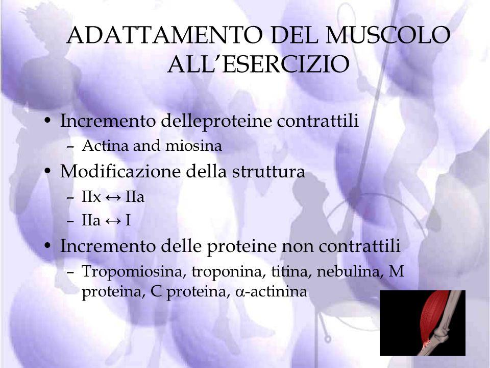 MECCANISMI DELLAZIONE ORMONALE IN RISPOSTA ALLESERCIZIO La fase di recupero dallesercizio anaerobico, promuove la crescita cellulare (effetto anabolic