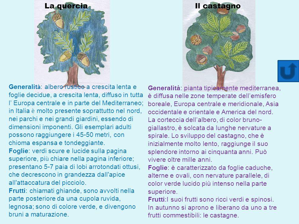 Generalit à : albero rustico a crescita lenta e foglie decidue, a crescita lenta, diffuso in tutta l Europa centrale e in parte del Mediterraneo; in Italia è molto presente soprattutto nel nord, nei parchi e nei grandi giardini, essendo di dimensioni imponenti.