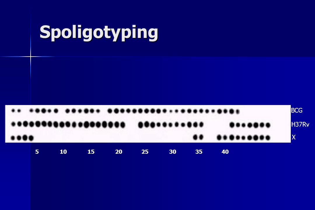 Spoligotyping 5 10 15 20 25 30 35 40 BCG H37Rv X