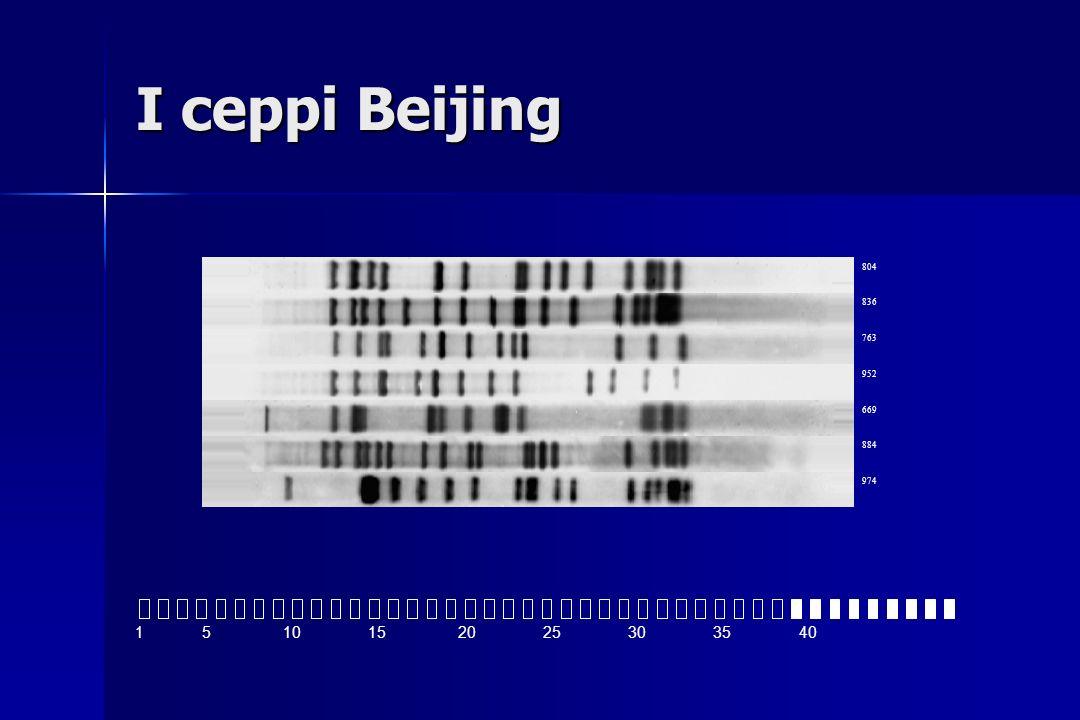 I ceppi Beijing 1 5 10 15 20 25 30 35 40 804 836 763 952 669 884 974