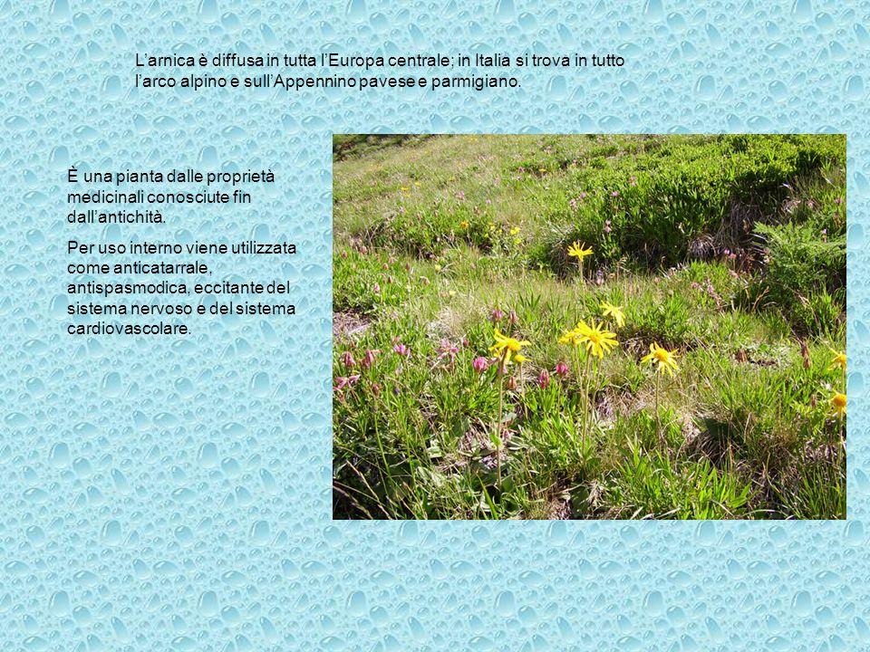 Larnica è diffusa in tutta lEuropa centrale; in Italia si trova in tutto larco alpino e sullAppennino pavese e parmigiano. È una pianta dalle propriet