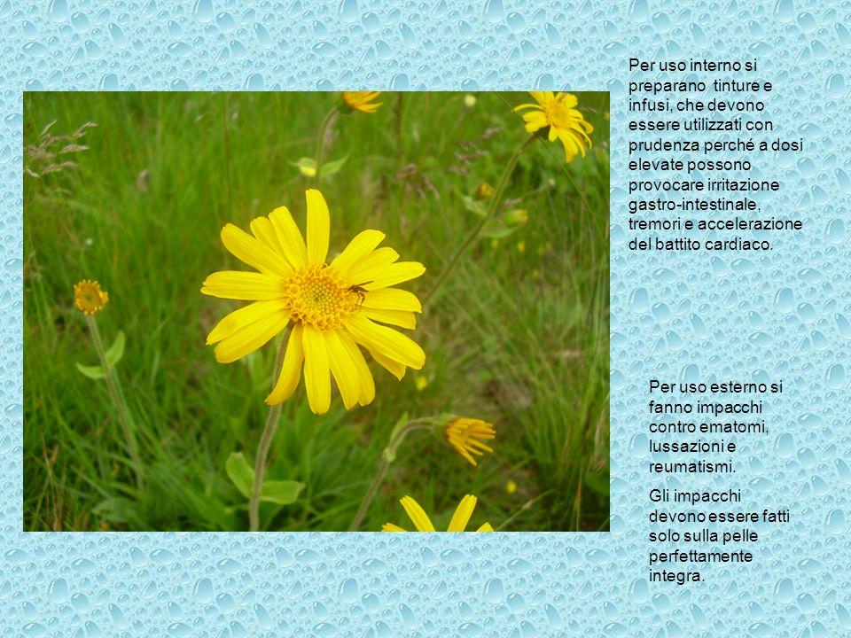 Le parti utilizzate sono il fiore e la radice, meglio se raccolti in autunno quando la concentrazione di principi attivi è maggiore.
