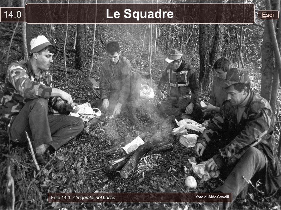 Esci Le Squadre 14.0 Foto 14.1: Cinghialai nel bosco foto di Aldo Covelli
