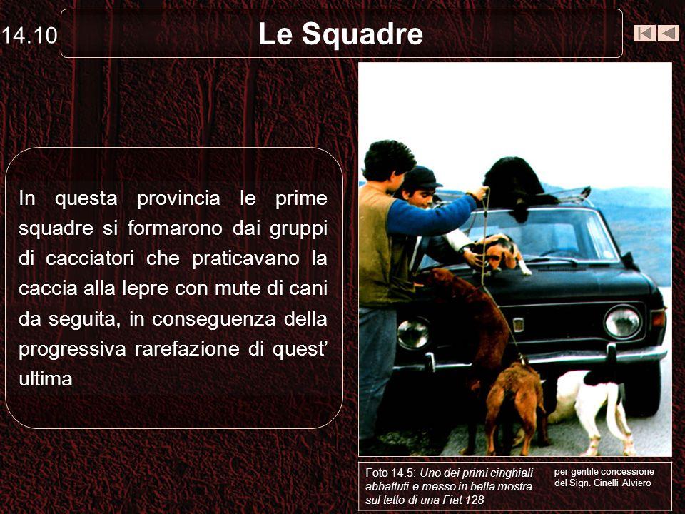Le Squadre In questa provincia le prime squadre si formarono dai gruppi di cacciatori che praticavano la caccia alla lepre con mute di cani da seguita