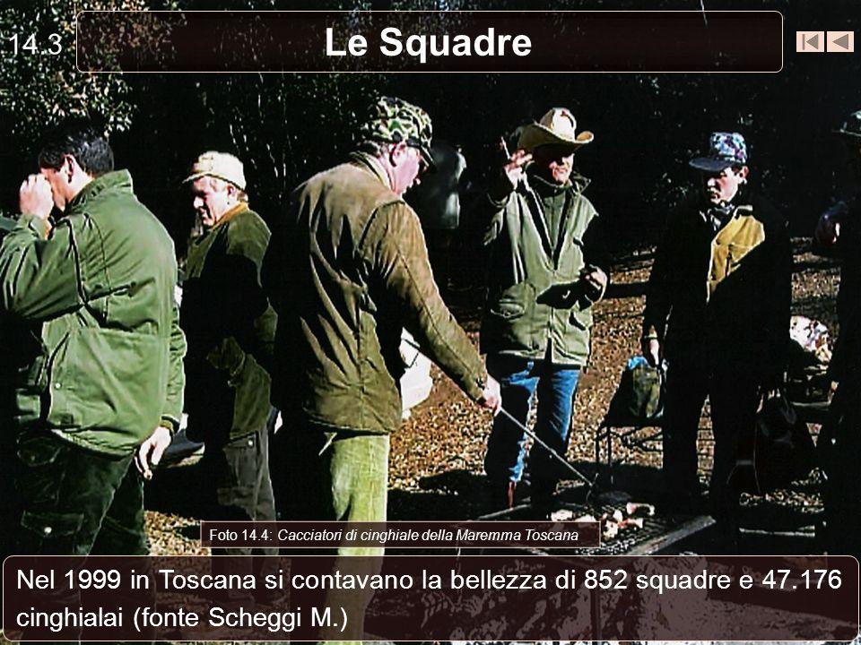 Le Squadre 14.3 Nel 1999 in Toscana si contavano la bellezza di 852 squadre e 47.176 cinghialai (fonte Scheggi M.) Foto 14.4: Cacciatori di cinghiale