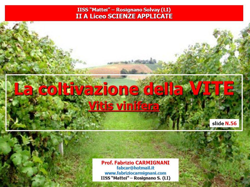 1 IISS Mattei – Rosignano Solvay (LI) II A Liceo SCIENZE APPLICATE La coltivazione della VITE Vitis vinifera Prof. Fabrizio CARMIGNANI fabcar@hotmail.