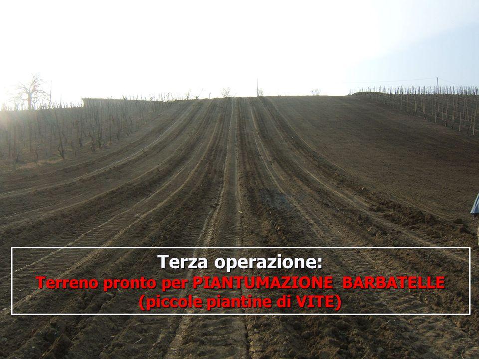 16/05/201415 Terza operazione: Terreno pronto per PIANTUMAZIONE BARBATELLE (piccole piantine di VITE)