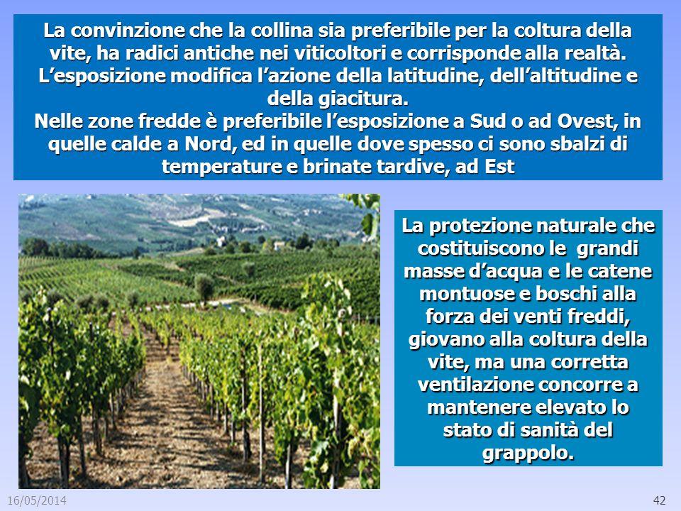 16/05/201442 La convinzione che la collina sia preferibile per la coltura della vite, ha radici antiche nei viticoltori e corrisponde alla realtà. Les