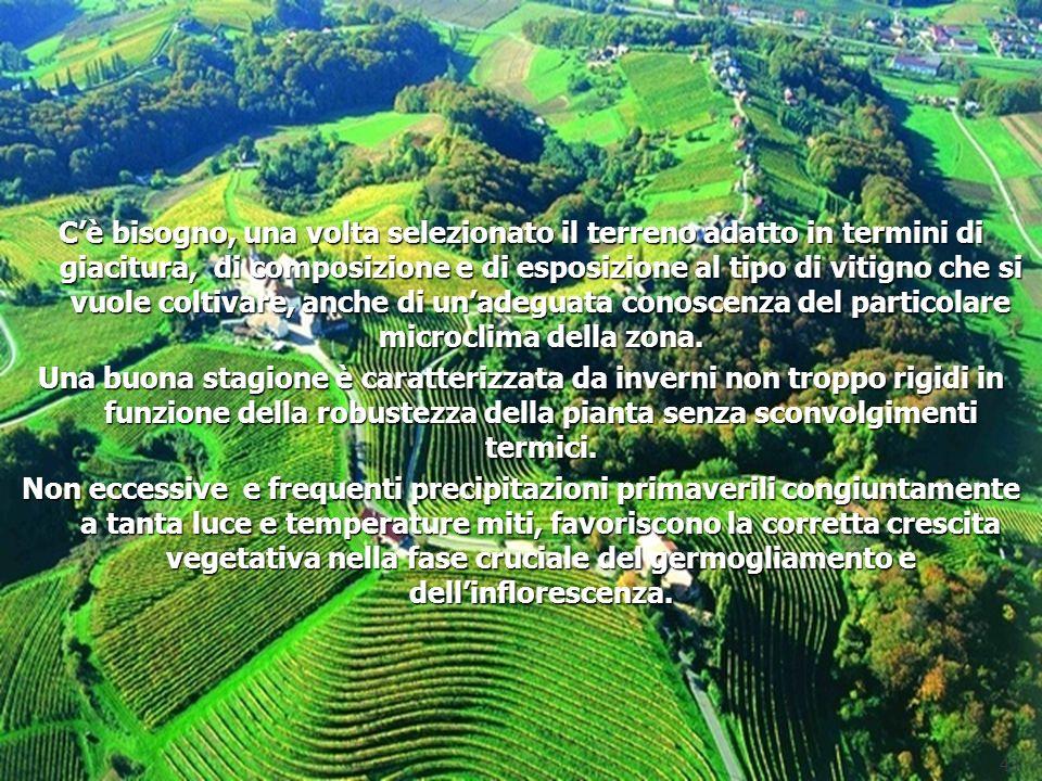 Cè bisogno, una volta selezionato il terreno adatto in termini di giacitura, di composizione e di esposizione al tipo di vitigno che si vuole coltivar