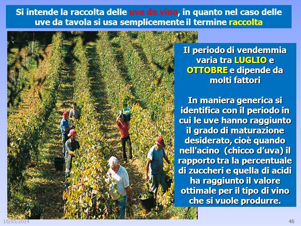 16/05/201446 Si intende la raccolta delle uve da vino, in quanto nel caso delle uve da tavola si usa semplicemente il termine raccolta Il periodo di v