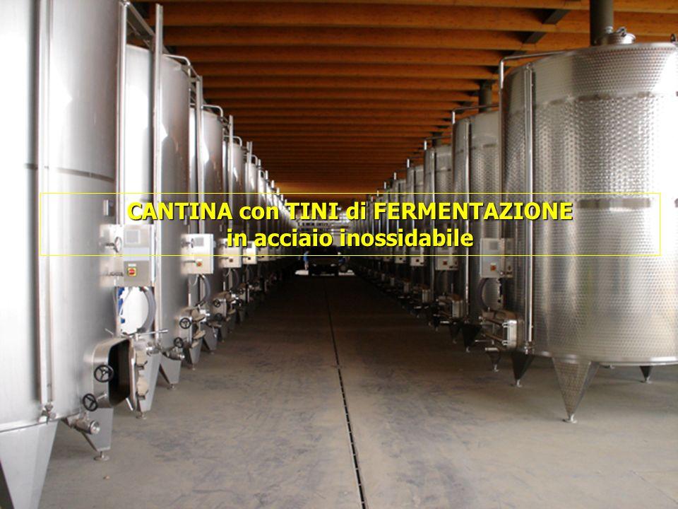 16/05/201453 CANTINA con TINI di FERMENTAZIONE in acciaio inossidabile