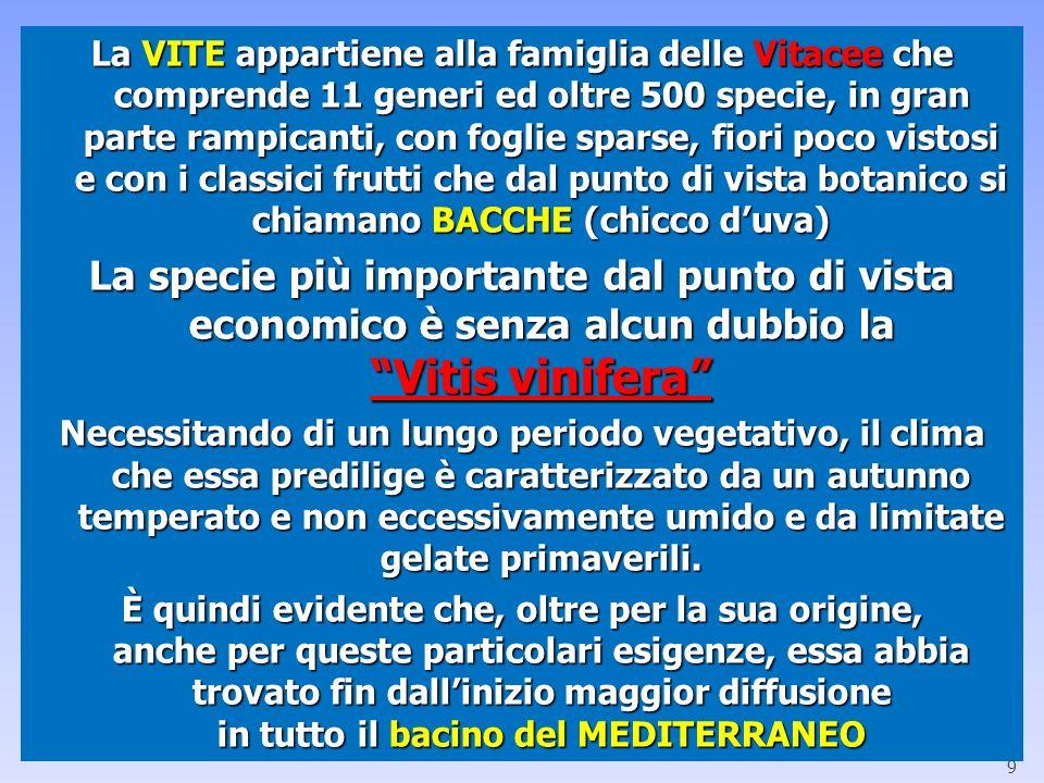La VITE appartiene alla famiglia delle Vitacee che comprende 11 generi ed oltre 500 specie, in gran parte rampicanti, con foglie sparse, fiori poco vi