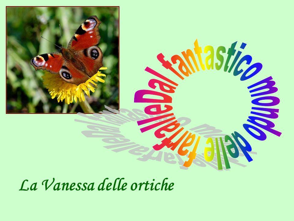 La Vanessa delle ortiche