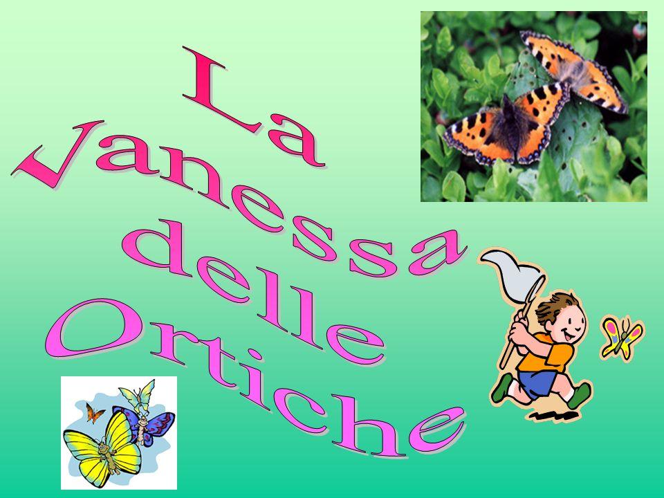 Notizie sulle Farfalle Le farfalle o lepidotteri sono presenti con circa quattromilatrecento specie in Italia.