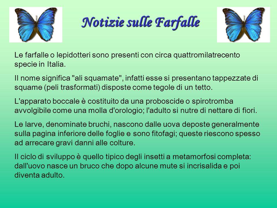 Notizie sulle Farfalle Le farfalle o lepidotteri sono presenti con circa quattromilatrecento specie in Italia. Il nome significa
