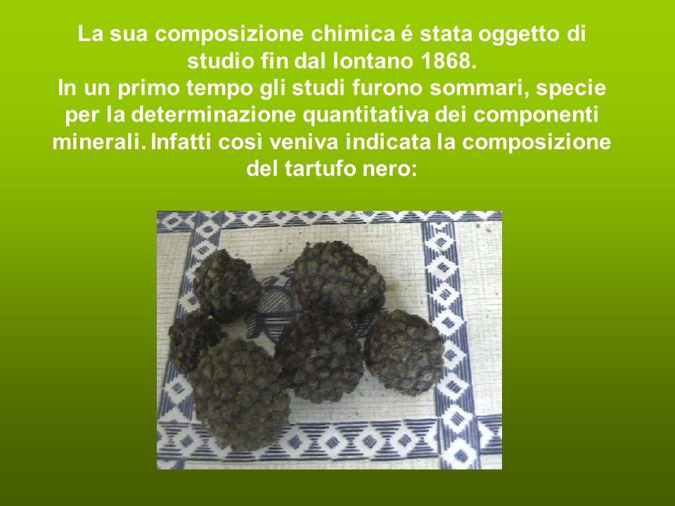 Sembra che il principale composto aromatico del tartufo bianco (Tuber magnatum Pico) sia il bismetiltiometano.
