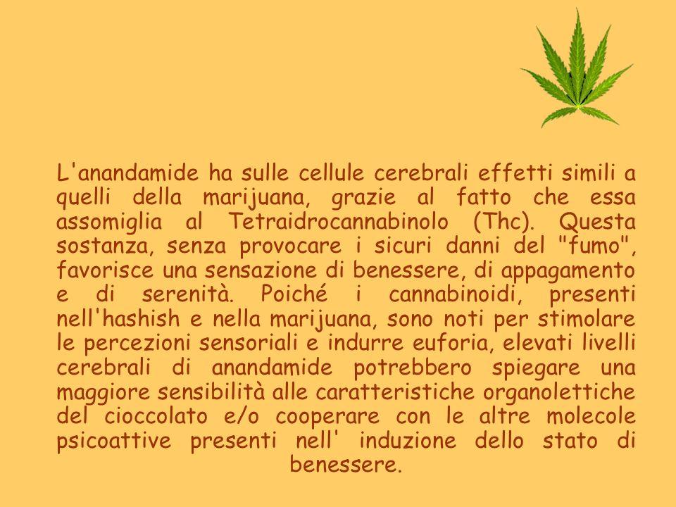 L'anandamide ha sulle cellule cerebrali effetti simili a quelli della marijuana, grazie al fatto che essa assomiglia al Tetraidrocannabinolo (Thc). Qu