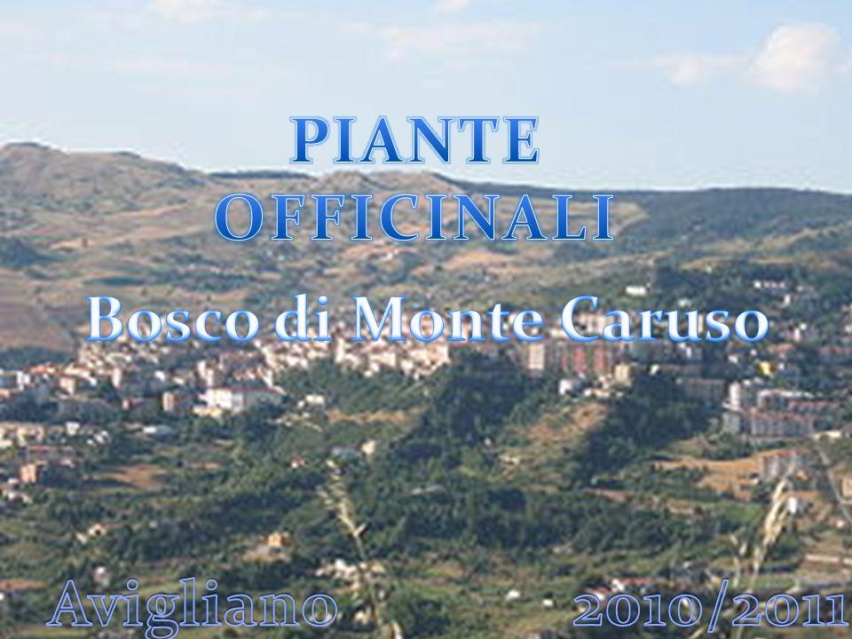 premessa Il presente lavoro illustra e descrive un campione di piante officinali presenti nel bosco di Monte Caruso, raccolte dai ragazzi della II C e II D della Scuola Media.
