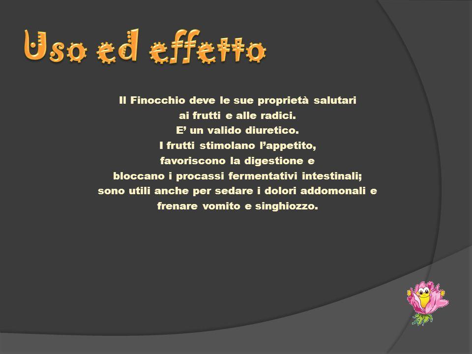 Il Finocchio deve le sue proprietà salutari ai frutti e alle radici. E un valido diuretico. I frutti stimolano lappetito, favoriscono la digestione e