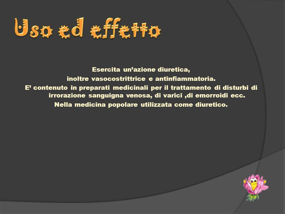 Esercita unazione diuretica, inoltre vasocostrittrice e antinfiammatoria. E contenuto in preparati medicinali per il trattamento di disturbi di irrora
