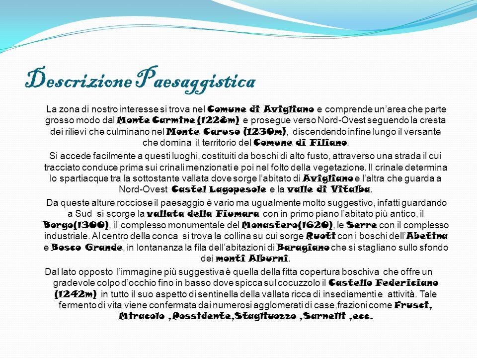 Descrizione Paesaggistica La zona di nostro interesse si trova nel Comune di Avigliano e comprende unarea che parte grosso modo dal Monte Carmine (122