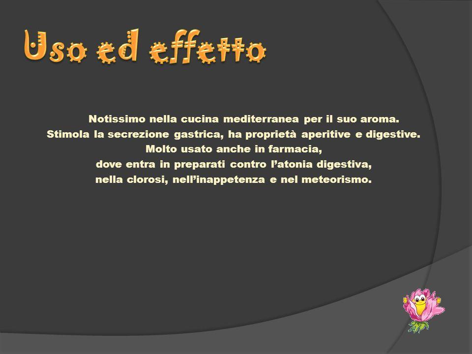 Notissimo nella cucina mediterranea per il suo aroma. Stimola la secrezione gastrica, ha proprietà aperitive e digestive. Molto usato anche in farmaci