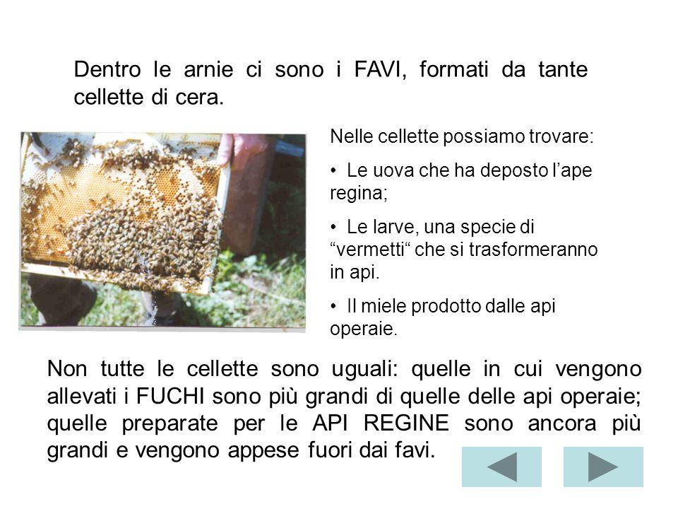 La Toscana miele ci presenta il mondo delle api. Ogni arnia è formata da due parti: il nido e il melario