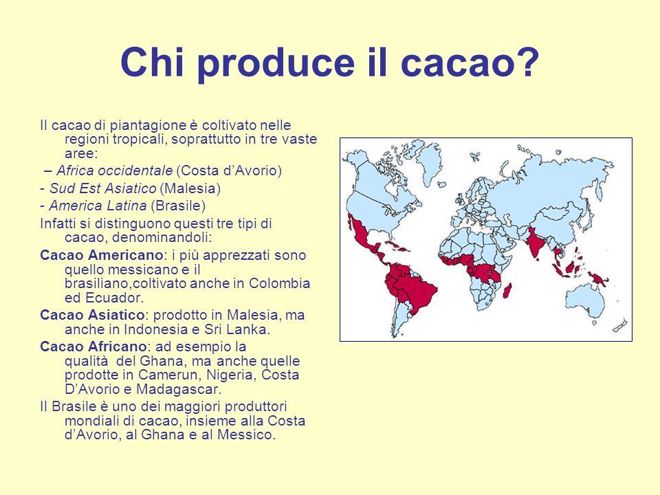 Chi produce il cacao? Il cacao di piantagione è coltivato nelle regioni tropicali, soprattutto in tre vaste aree: – Africa occidentale (Costa dAvorio)