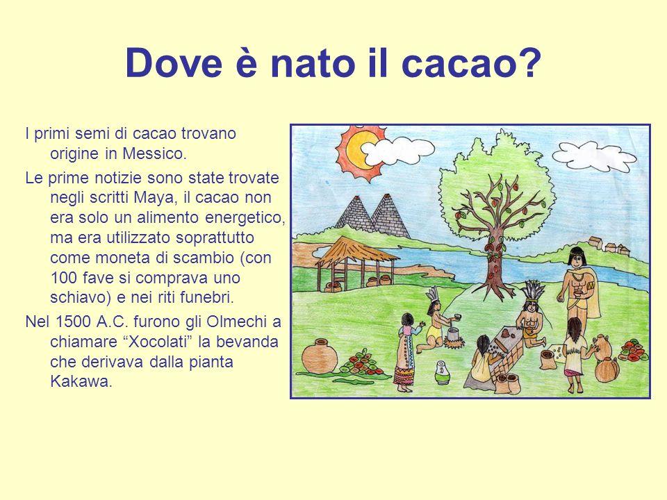 Dove è nato il cacao? I primi semi di cacao trovano origine in Messico. Le prime notizie sono state trovate negli scritti Maya, il cacao non era solo