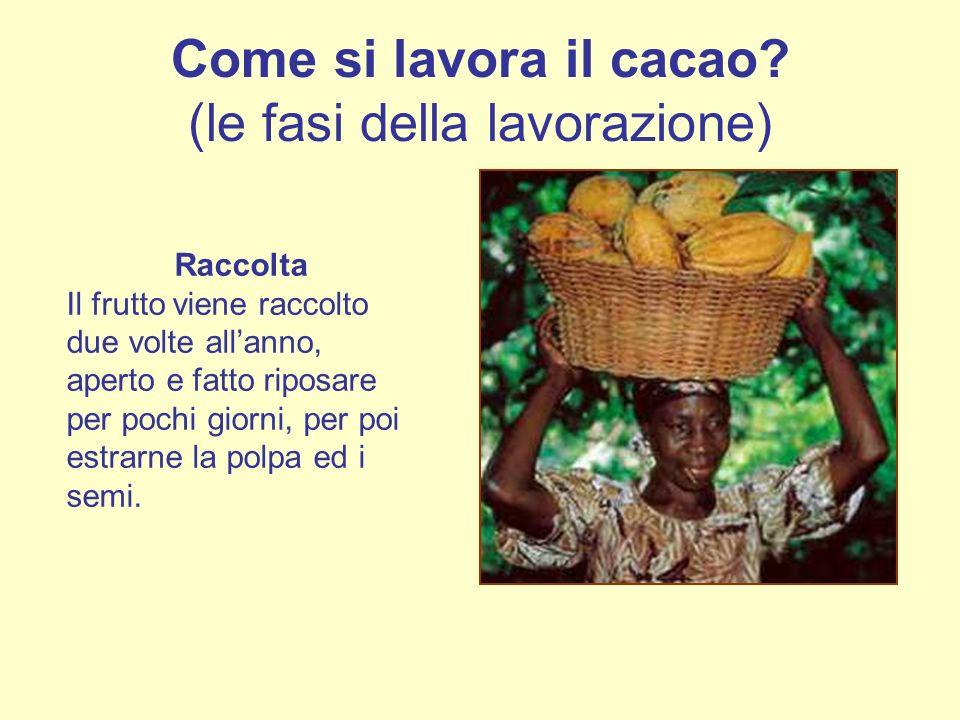 Come si lavora il cacao? (le fasi della lavorazione) Raccolta Il frutto viene raccolto due volte allanno, aperto e fatto riposare per pochi giorni, pe