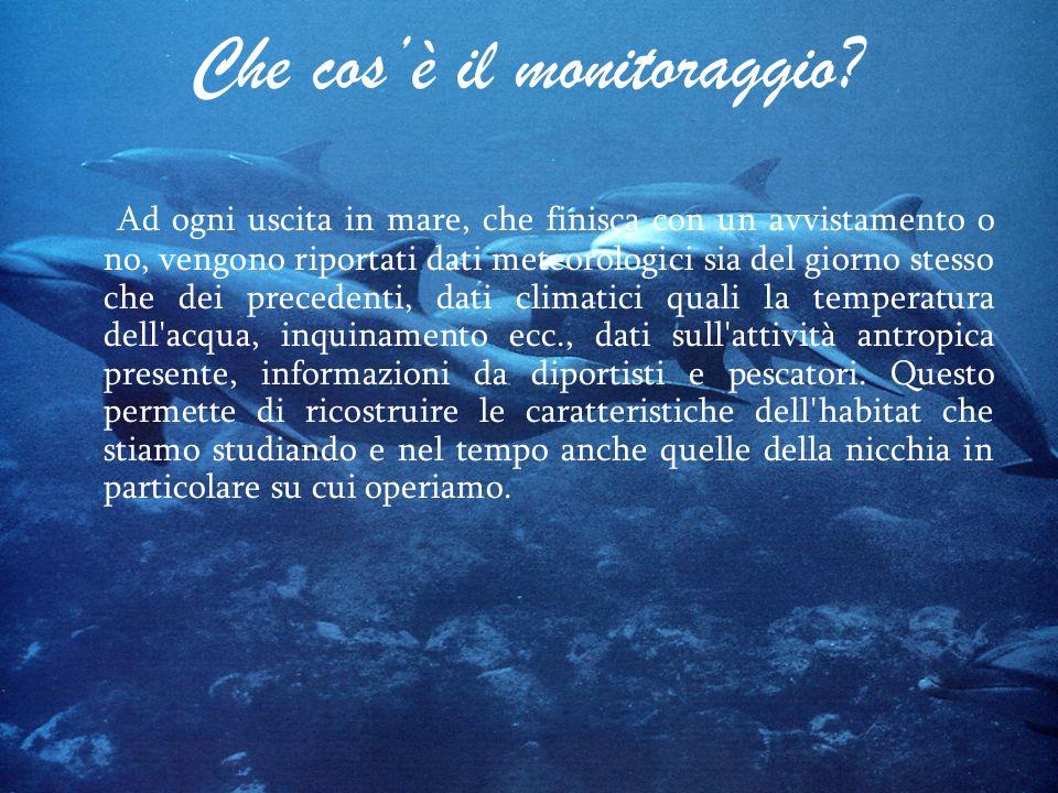Che cosè il monitoraggio? Ad ogni uscita in mare, che finisca con un avvistamento o no, vengono riportati dati meteorologici sia del giorno stesso che