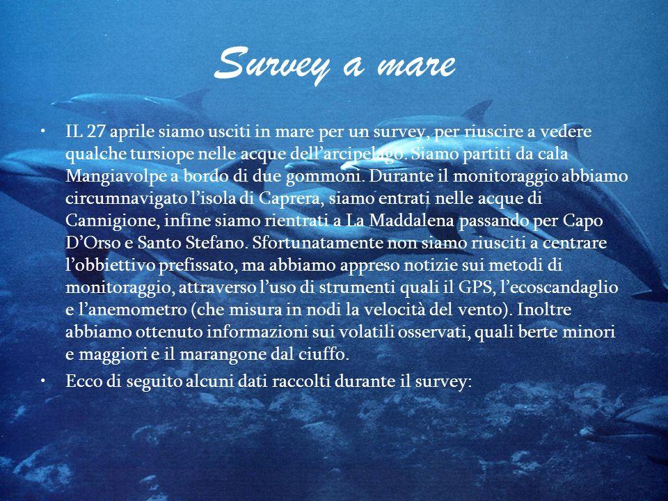 Survey a mare IL 27 aprile siamo usciti in mare per un survey, per riuscire a vedere qualche tursiope nelle acque dellarcipelago. Siamo partiti da cal