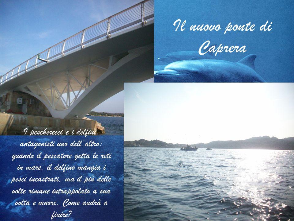 Il nuovo ponte di Caprera I pescherecci e i delfini, antagonisti uno dellaltro: quando il pescatore getta le reti in mare, il delfino mangia i pesci i